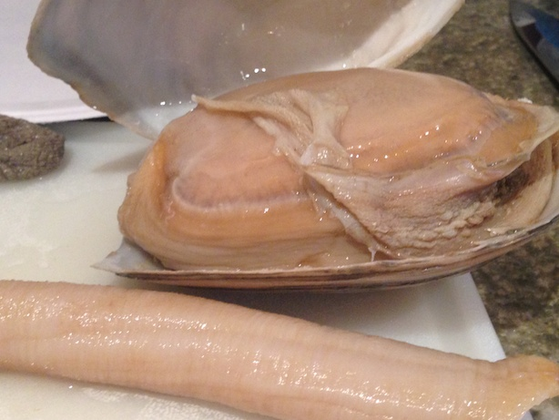 geoduck body upclose